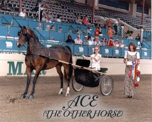 Ace - the other horse