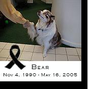 Bear, V.I.P. Office Greeter